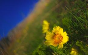 Картинка поле, цветок, макро