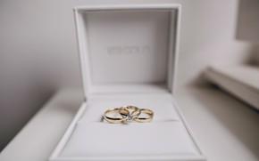 Картинка love, gold, romantic, обручальные кольца, wedding, box gift