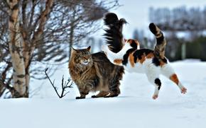 Обои прыжок, два кота, нападение, ситуация, коты, снег, зима