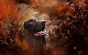 Обои собака, осень, природа