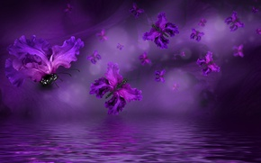 Обои purple, butterflies, floral, бабочки, water, лепестки
