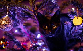 Картинка глаза, кот, черный, игрушки, елка