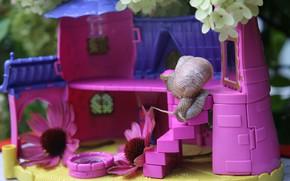 Картинка фиолетовый, цветы, фон, розовый, улитка, домик, кукольный дом, любопытство, игрушечный, для Барби, ахатина, пластмассовый
