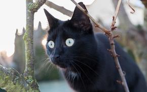 Обои кот, глаза, взгляд