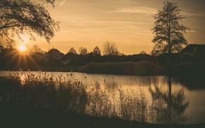 Картинка grass, twilight, river, sunset, houses, dusk, branches, bush