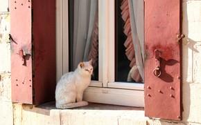 Обои кошка, окно, шторки, солнце, белый, кот