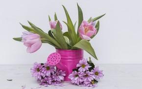 Картинка Цветы, Тюльпаны, Хризантемы, Лейка