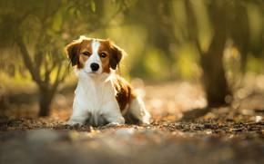 Картинка взгляд, собака, боке