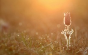 Картинка цветок, природа, весна