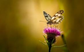 Обои бабочка, фон, цветок, макро, лето