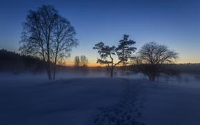 Картинка зима, снег, след, утро