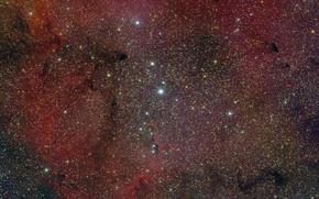 Обои туманность, звезды, космос, elephant trunk