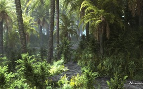 Картинка лес, природа, растительность, джунгли, tropicana