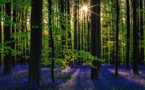 Картинка лес, солнце, деревья, цветы, природа, весна
