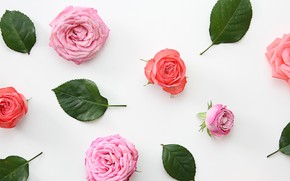 Картинка розы, лепестки, wallpaper, бутоны, design, pink, flowers, декор, roses