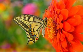 Обои Butterfly, Цветок, Бабочка, Flower, Macro, Макро