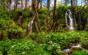 Картинка зелень, лес, трава, деревья, ручей, водопад, мох, HDR, Хорватия, Plitvice national park
