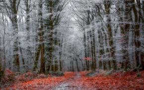 Обои зима, лес, природа