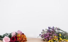 Картинка цветы, хризантемы, полевые цветы, букеты