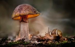 Картинка листья, природа, гриб, мох, улитка, боке