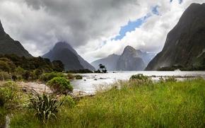 Картинка зелень, трава, облака, деревья, горы, река, скалы, Новая Зеландия, Milford Sound, Fiordland National Park