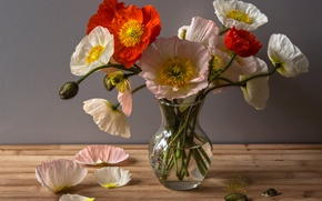 Картинка Маки, Ваза, Лепестки, Vase, Poppies