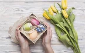 Картинка праздник, весна, Пасха, тюльпаны, box, flower, gift, spring, Easter, eggs, hands
