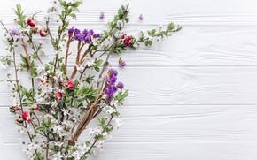Картинка цветы, ветки, природа, фон, весна, цветение