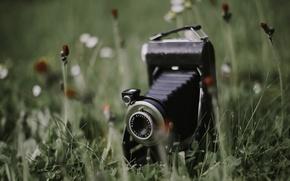 Картинка трава, фон, камера