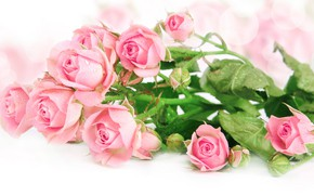 Картинка цветы, розы, букет, лепестки, розовые, бутоны, декор, композиция