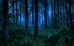 Обои природа, лес, ночь, кусты, деревья
