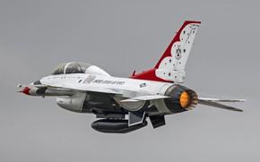 Картинка Fighting Falcon, Thunderbirds, General Dynamics, F-16D