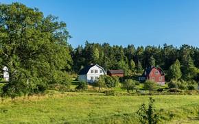 Картинка зелень, лето, небо, трава, солнце, деревья, домики, Стокгольм, Швеция, кусты