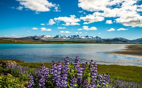 Картинка небо, облака, цветы, горы, река, берег, домики, солнечно, Исландия, люпин, Snaefellsnesog Hnappadalssysla