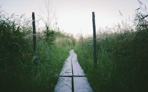 Картинка трава, мост, природа