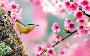 Картинка цветы, природа, дерево, птица, ветка, весна, сакура, ствол
