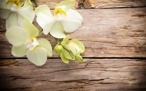 Картинка wood, орхидея, flowers, orchid
