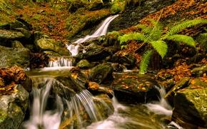 Картинка осень, листья, камни, листва, водопад, Испания, папоротник, каскад, Spain, Страна Басков, Basque Country