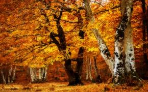 Картинка осень, деревья, пейзаж, парк, листва, текстура