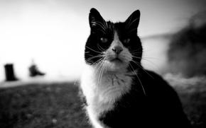 Картинка кот, усы, взгляд