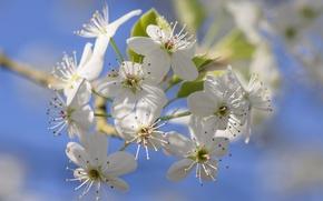 Обои сад, весна, лепестки, цветы