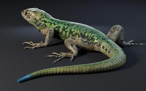 Обои ящерица, рептилия, Nicolas MOREL, Lezard - PackShot and Incrustation