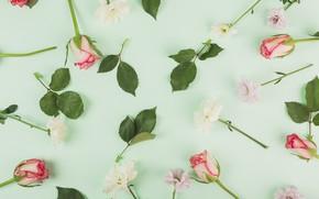 Картинка цветы, Розы, Хризантемы