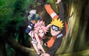Картинка Naruto, anime, ninja, manga, shinobi, Naruto Shippuden, japonese