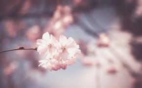 Картинка Sky, Flower, Macro
