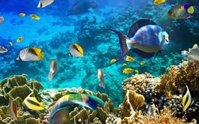 Картинка вода, рыбы, глубина