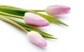 Картинка цветы, букет, fresh, pink, flowers, beautiful, tulips, розовые тюльпаны