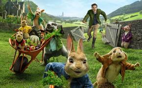 Обои мультфильм, кролики, парень, Peter Rabbit, Кролик Питер, свинья