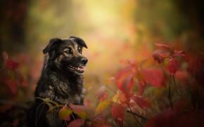 Обои собака, ветки, боке, осень, листья