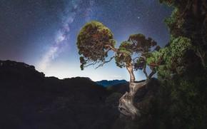 Обои млечный путь, деревья, звезды, ночь, небо
